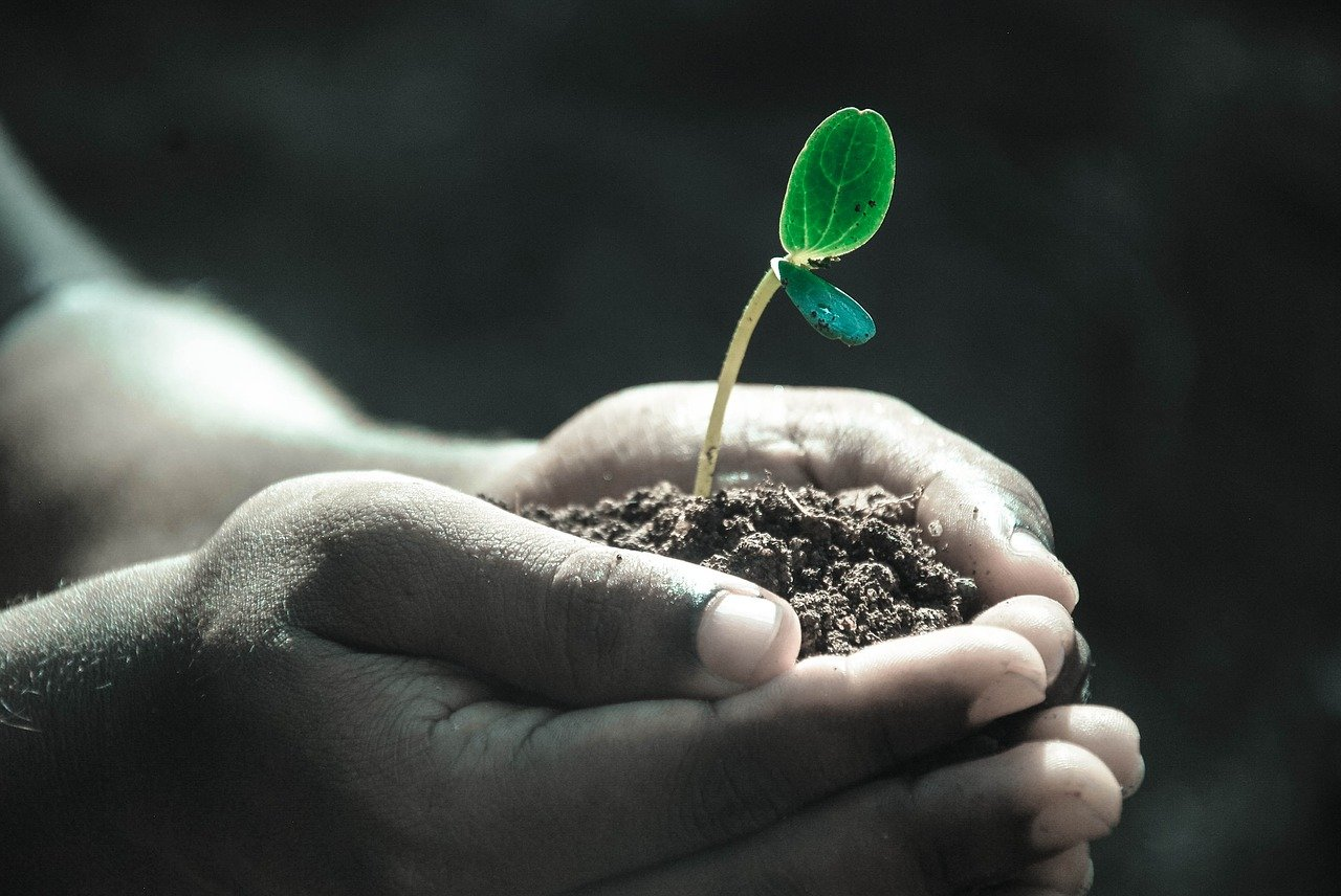 grow your own future